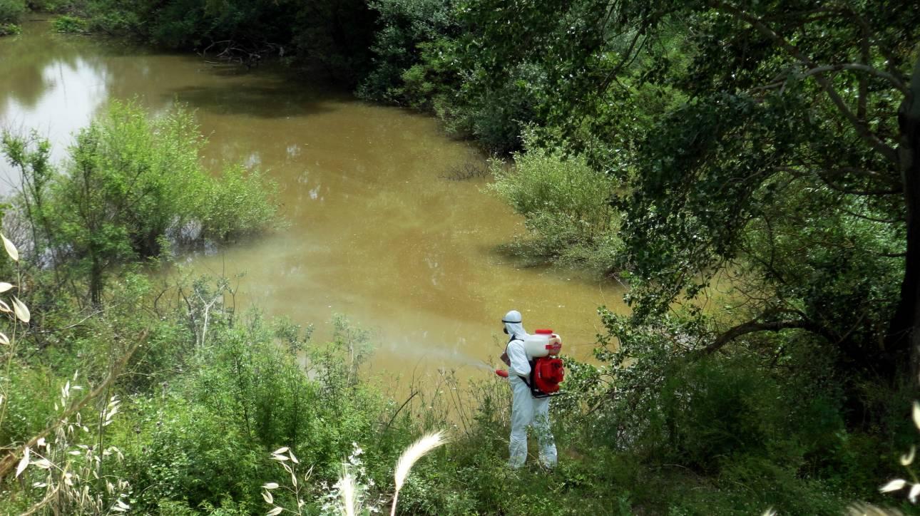 Θεσσαλονίκη: Τριετές πρόγραμμα για την καταπολέμηση των κουνουπιών