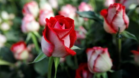 Άγιος Βαλεντίνος: Γιατί ο έρωτας δεν περνάει από την καρδιά