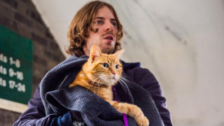 Η ιστορία ενός αδέσποτου γάτου που έγινε κινηματογραφικός αστέρας (vid)