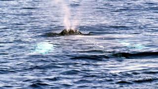 Τραυματισμένη φάλαινα εμφανίστηκε στα νερά της Ικαρίας (vid)