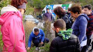 Λίμνη Ευβοίας: Δενδροφύτευση στις καμένες περιοχές (pic)