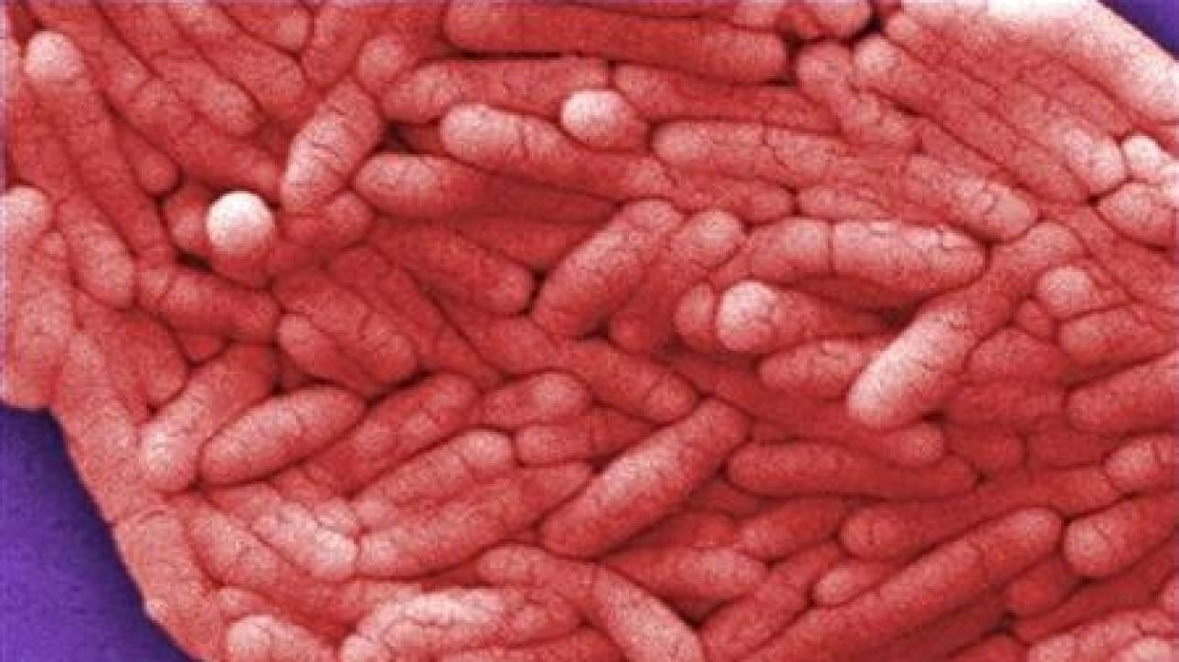 Τα υπερμικρόβια απειλούν ανθρώπους, ζώα και τρόφιμα