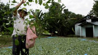 Βολιβία: Εγκρίθηκε ο διπλασιασμός της έκτασης για την καλλιέργεια φύλλων κόκας