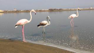 Απελευθέρωσαν τρία φλαμίνγκο στην Λιμνοθάλασσα Καλοχωρίου (pics)