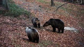 Ήρθε η Άνοιξη... Ξύπνησαν οι αρκούδες στο Νυμφαίο (pics)