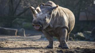 Σε 24ωρη φύλαξη ο μοναδικός λευκός ρινόκερος παγκοσμίως