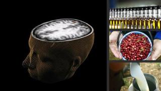 Ποιες τροφές σας προστατεύουν από το Αλτσχάιμερ