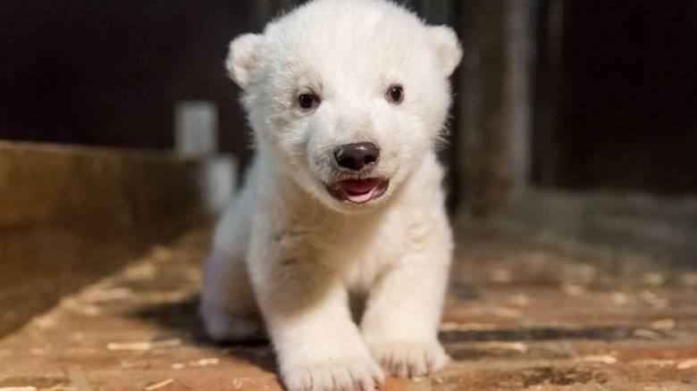 Το Βερολίνο θρηνεί τον χαμό του πολικού αρκούδου Φριτς (pics)