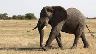 Οι ελέφαντες τρομάζουν από κάτι πολύ μικρότερο από ένα ποντίκι
