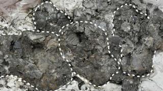 Ανακαλύφθηκαν τα αρχαιότερα αυγά κροκοδείλου (pics)