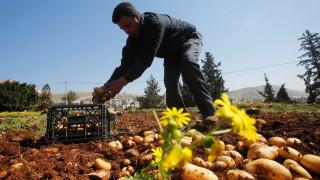 Καλλιέργησαν πατάτες σε συνθήκες παρόμοιες με αυτές του πλανήτη Άρη