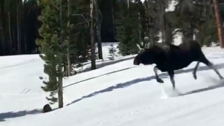 «Τρεχάτε ποδαράκια μου»: Άλκη καταδιώκει δύο snowboarders (Vids)