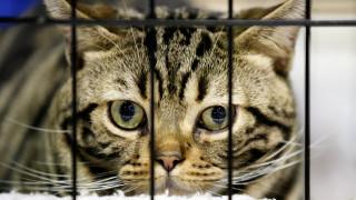 Πέταξε γάτα από τον 10ο όροφο και καταδικάστηκε σε φυλάκιση