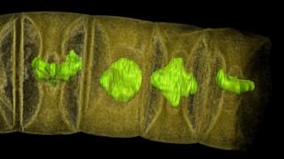 Εντυπωσιακή ανακάλυψη στην Ινδία: Απολιθώματα 1,6 δισ. ετών