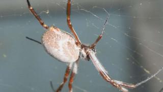 Απίστευτο! Πόσους τόνους εντόμων καταναλώνουν οι... αχόρταγες αράχνες