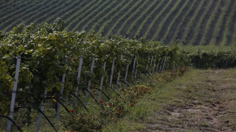 Υπεγράφη πρόγραμμα προώθησης του ελληνικού κρασιού στις διεθνείς αγορές