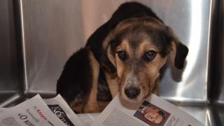 Φυλάκιση και πρόστιμο σε άνδρα για ξυλοδαρμό σκύλου