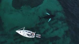 Κολυμπώντας με «φάλαινες δολοφόνους» στη Νορβηγία (vid)