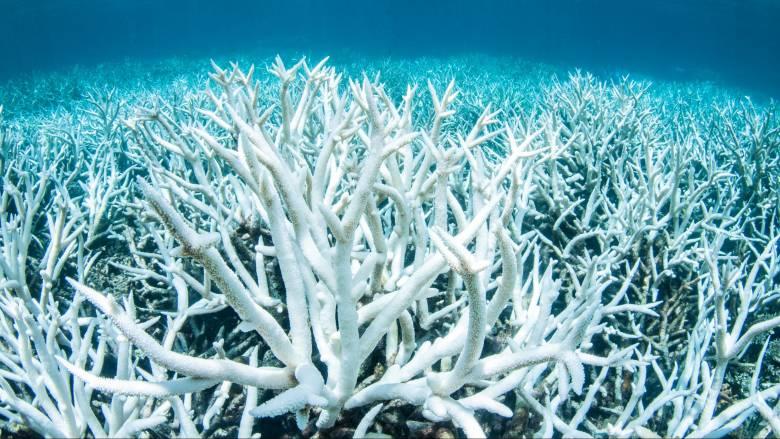Αργοπεθαίνει ο Μεγάλος Κοραλλιογενής Ύφαλος της Αυστραλίας