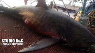 Αργολίδα: 4 μέτρα καρχαρία έπιασε ψαράς στη Νέα Κίο (Pics)