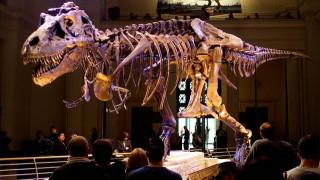 Οι πρώτοι δεινόσαυροι ζούσαν στη Βρετανία και ήταν παμφάγοι