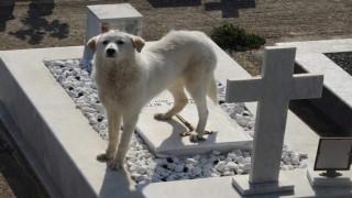 «Χάτσικο» και στην Άρτα - Περιμένει στον τάφο του αφεντικού της (pics)