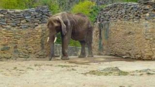 Σοκάρει η φωτογραφία πεινασμένου ελέφαντα σε ζωολογικό κήπο της Βενεζουέλας