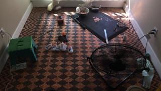 Ένα πάτωμα φτιαγμένο από 13.000 κέρματα (pics)