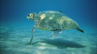 Μαζικές δολοφονίες χελώνων στο Αιγαίο