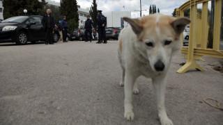 Πάτρα: Ιερέας φέρεται να πυροβόλησε θανάσιμα δύο σκύλους