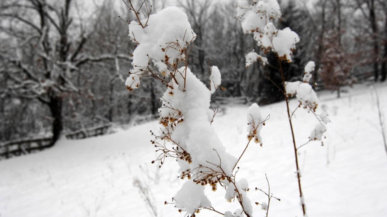 Αποτέλεσμα εικόνας για χιονιζει