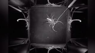 Έτσι «χτυπούν» οι επτά πιο θανατηφόροι σκορπιοί στον κόσμο (Vid)
