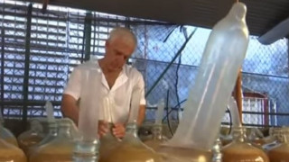 Οινοποιός από την Κούβα χρησιμοποιεί προφυλακτικά για την παραγωγή κρασιού (Vid)