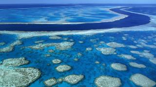 Η υπερθέρμανση σκοτώνει τον Μεγάλο Κοραλλιογενή Ύφαλο της Αυστραλίας