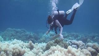 Σβήνει ο Μεγάλος Κοραλλιογενής Ύφαλος