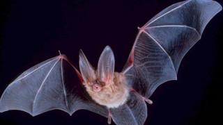 Μια νεκρή νυχτερίδα βρέθηκε σε συσκευασμένη σαλάτα στη Φλόριντα