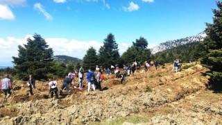 «Ανάσα ζωής» στη Δίρφυ: Παιδιά και εθελοντές φύτεψαν 1.400 έλατα