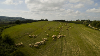 Drone απαθανατίζει ένα κοπάδι προβάτων στην ορεινή Ηλεία (pics)