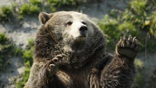 Καστοριά: Άλλη μια αρκούδα θύμα τροχαίου (pic)