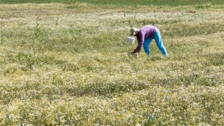 Διευκρινίσεις Πετρόπουλου για τη συνταξιοδότηση αγροτών