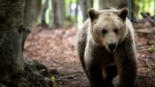 Φλώρινα: Μια πεινασμένη αρκούδα ψάχνει φαγητό σε κάδους και αυλές (pic)