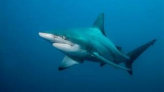 Έριξε μπουνιά στον καρχαρία για να σώσει τη γυναίκα του