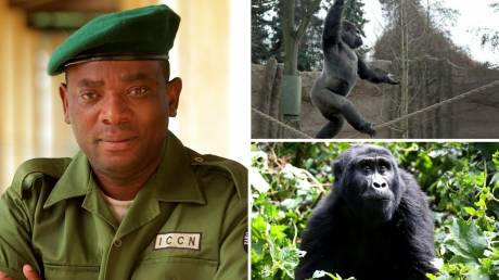 Ροντρίγκ Μουγκαρούκα Κατέμπο: Ο πρώην στρατιώτης που ρισκάρει τη ζωή του για να σώζει γορίλες