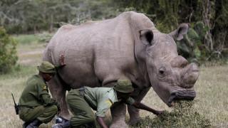 Κένυα: Ένας λευκός ρινόκερος αναζητά ταίρι μέσω γνωστής εφαρμογής (pics)
