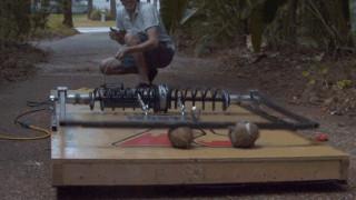 Γιγάντια ποντικοπαγίδα καταστρέφει καρύδες (vid)