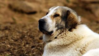 Βόλος: 2,5 χρόνια με αναστολή σε ηλικιωμένο που πυροβόλησε σκύλο