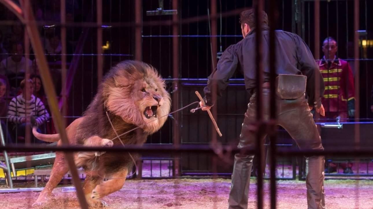 Θρίλερ σε τσίρκο στη Γαλλία: Λιοντάρι βούτηξε από τον λαιμό τον εκπαιδευτή του (vid)