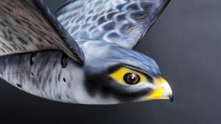 Ρομπότ γεράκι διώχνει τα πουλιά από τον διάδρομο προσγείωσης