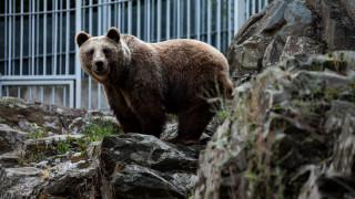 Άγρια ζώα θα εξακολουθήσει να φιλοξενεί ο Ζωολογικός Κήπος της Θεσσαλονίκης