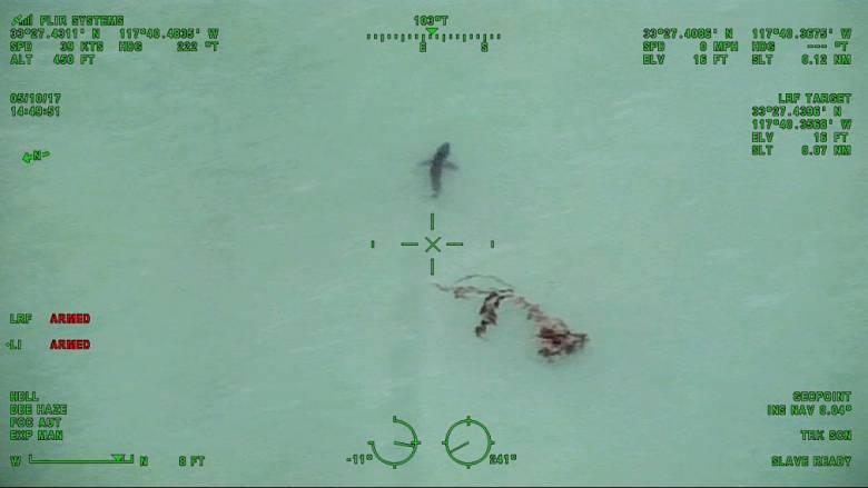 Αδειάζουν οι παραλίες στην Καλιφόρνια: 15 φονικοί καρχαρίες κυκλοφορούν στα ρηχά (Vid)